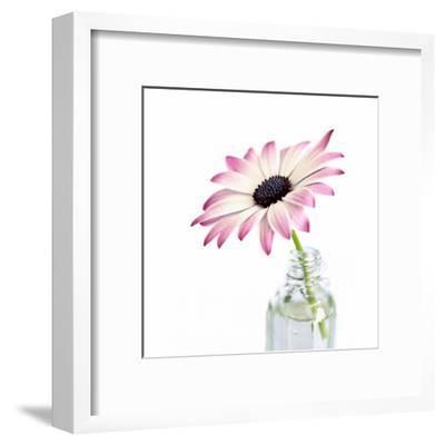 Daisy - Square-Lebens Art-Framed Art Print