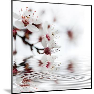 White Cherry Blossom - Square-Lebens Art-Mounted Art Print