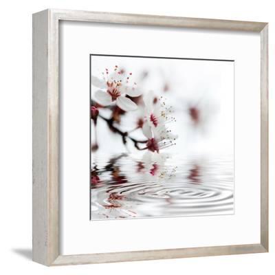 White Cherry Blossom - Square-Lebens Art-Framed Art Print