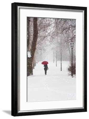 Winter Rose-Stefano Corso-Framed Art Print