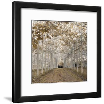 White Gold-Assaf Frank-Framed Giclee Print