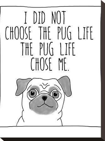 Pug Life-Jan Weiss-Stretched Canvas Print