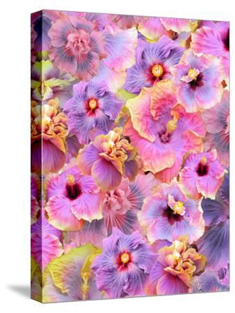 Hibiscus Tropical Floral Flowers 2-Grab My Art-Stretched Canvas Print