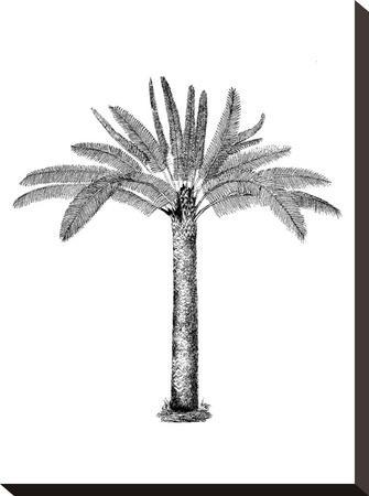 Vintage Palm Tree-Lebens Art-Stretched Canvas Print