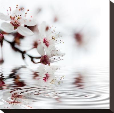 White Cherry Blossom - Square-Lebens Art-Stretched Canvas Print