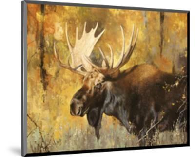Autumn Moose Study #1-Mark Kelso-Mounted Art Print