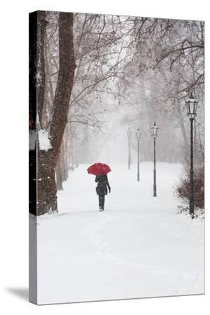 Winter Rose-Stefano Corso-Stretched Canvas Print