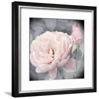 Belle Rose I-Linda Wood-Framed Giclee Print
