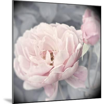 Belle Rose I-Linda Wood-Mounted Giclee Print