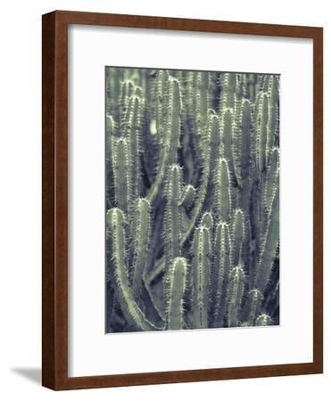 Tule-Ella Lancaster-Framed Giclee Print