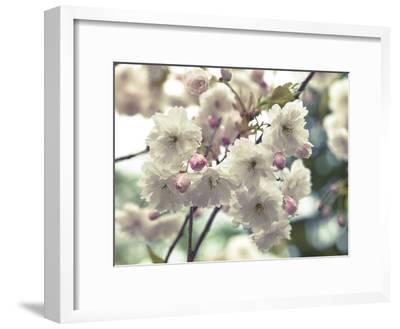 Floral Fancy-Assaf Frank-Framed Giclee Print