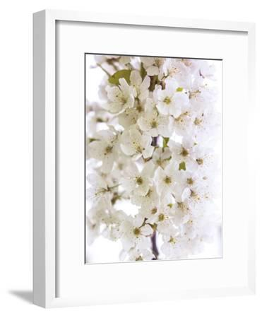 Blossom Bundle-Assaf Frank-Framed Giclee Print
