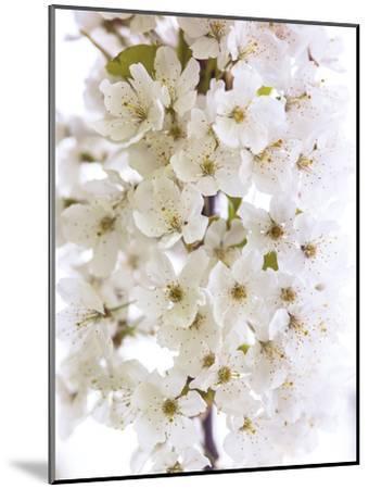 Blossom Bundle-Assaf Frank-Mounted Giclee Print