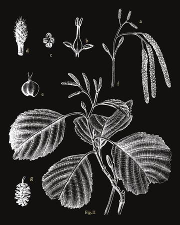 Botanicus Herba-Maria Mendez-Framed Giclee Print