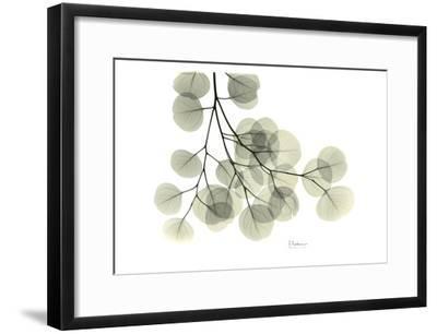 Eucalyptus-Albert Koetsier-Framed Art Print