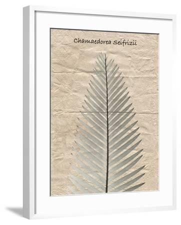 Chamaedorea Illustration-Albert Koetsier-Framed Art Print