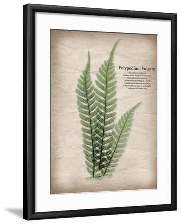 Parchment Fern-Albert Koetsier-Framed Art Print