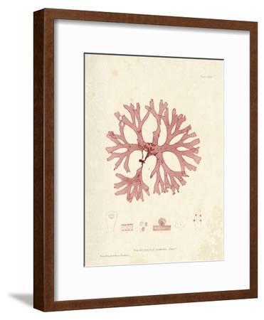 Rhodymenia palmetta-Henry Bradbury-Framed Art Print