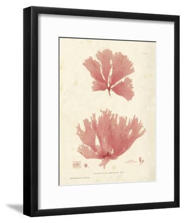 Nitophyllum greville-Henry Bradbury-Framed Art Print