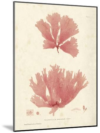 Nitophyllum greville-Henry Bradbury-Mounted Art Print