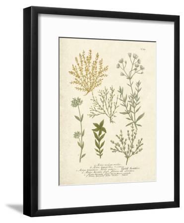 Botanica Alsine-The Vintage Collection-Framed Art Print