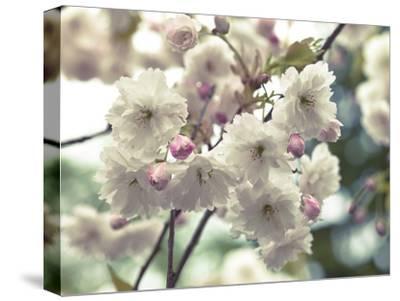 Floral Fancy-Assaf Frank-Stretched Canvas Print