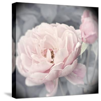 Belle Rose I-Linda Wood-Stretched Canvas Print