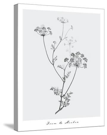 From the Meadow-Maria Mendez-Stretched Canvas Print