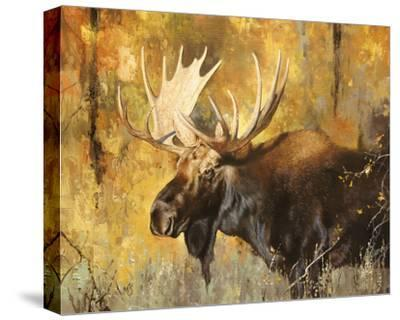 Autumn Moose Study #1-Mark Kelso-Stretched Canvas Print