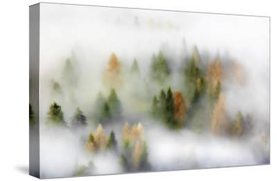 Autumn Dream-Kristjan Rems-Stretched Canvas Print