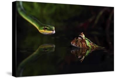 Courage-Shikhei Goh-Stretched Canvas Print