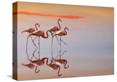 Untitled-Anna Cseresnjes-Stretched Canvas Print