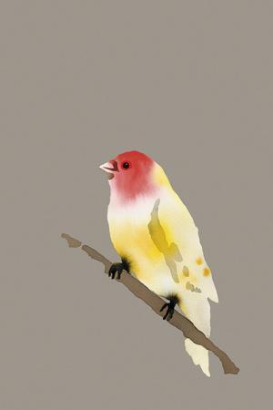 Paintbox Birds - Hope-Kristine Hegre-Framed Giclee Print