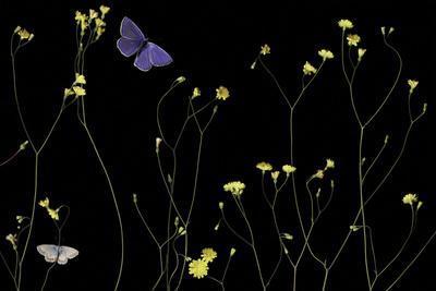 Mellow Flitter-Wild Wonders of Europe-Framed Giclee Print