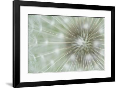 Dandelion Focus-Wild Wonders of Europe-Framed Giclee Print