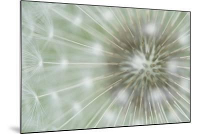 Dandelion Focus-Wild Wonders of Europe-Mounted Giclee Print