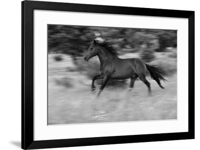 Chestnut Bolt-Staffan Widstrand-Framed Giclee Print