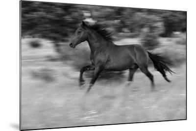 Chestnut Bolt-Staffan Widstrand-Mounted Giclee Print
