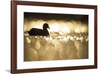 Glistening Glide-Staffan Widstrand-Framed Giclee Print