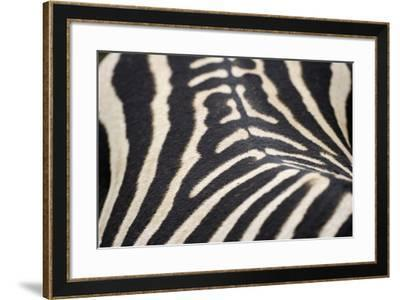 Zebra Stripes-Staffan Widstrand-Framed Giclee Print