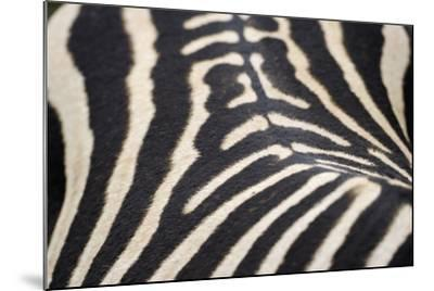 Zebra Stripes-Staffan Widstrand-Mounted Giclee Print