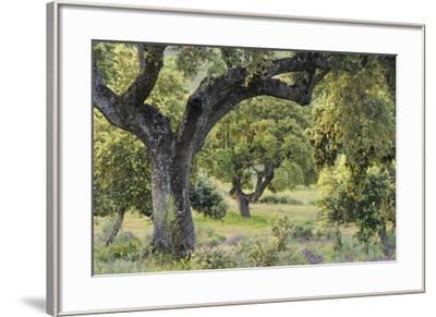 Thoughtful Wander-Staffan Widstrand-Framed Giclee Print