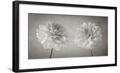 Dahlia Duet-Assaf Frank-Framed Art Print