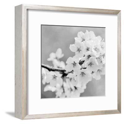 Postcard Magnolia 3-Kimberly Allen-Framed Art Print