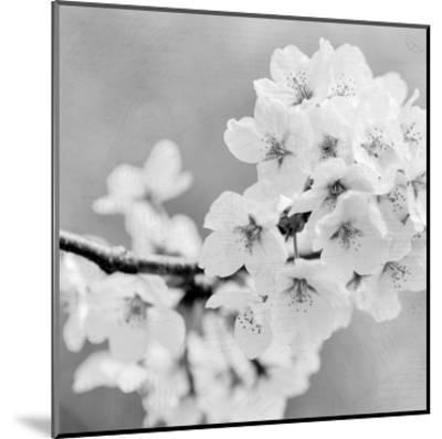 Postcard Magnolia 3-Kimberly Allen-Mounted Art Print