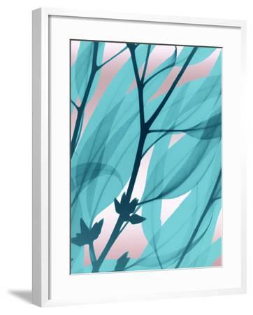 Eucalyptus Cotton Candy-Albert Koetsier-Framed Art Print