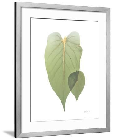 Golden Philodendron 2-Albert Koetsier-Framed Art Print