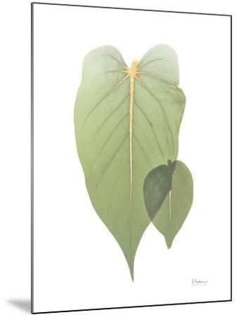 Golden Philodendron 2-Albert Koetsier-Mounted Art Print