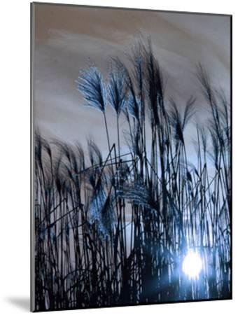Blue Sunset 1-Sheldon Lewis-Mounted Art Print