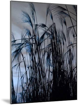 Blue Sunset 2-Sheldon Lewis-Mounted Art Print